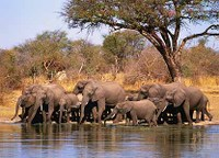 Watering_hole