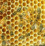 Hive_6
